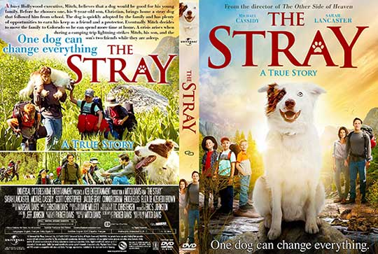 The Stray (2017) DVD Cover